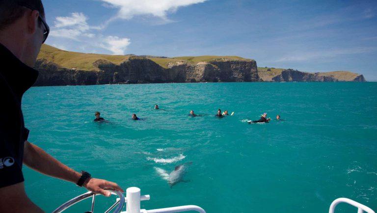 New Zealand – Swim with the friendliest dolphins