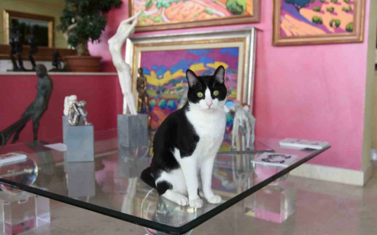 Art in Puerto Banus and Benito the cat