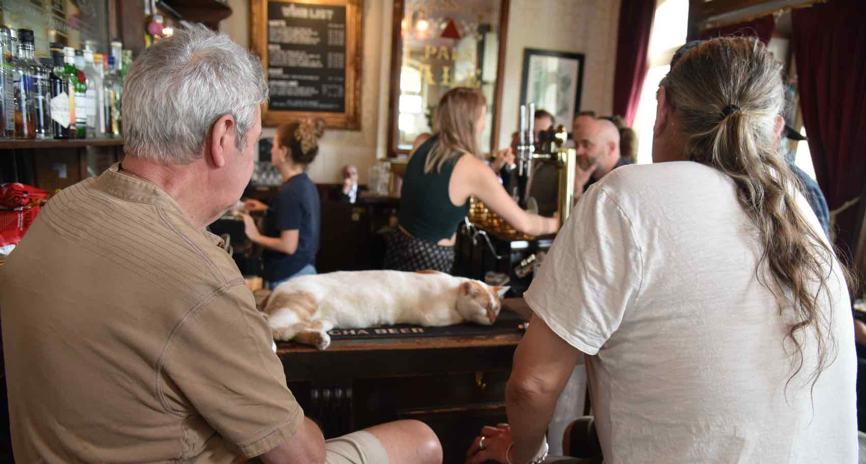Relax with the guests; The Pub Cat at Pineapple in Kentish Town