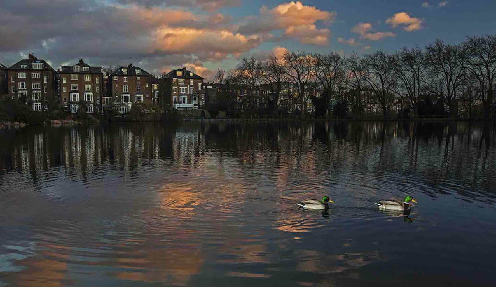 A Pond at Hampstead Heath in North London