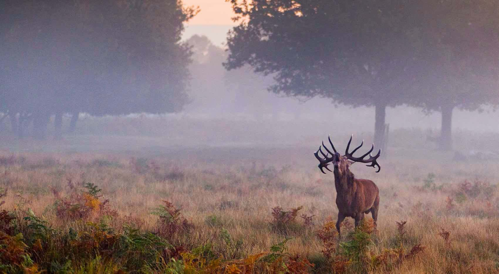 Richmond Park - The biggest Royal Park in London remains largely unspoiled