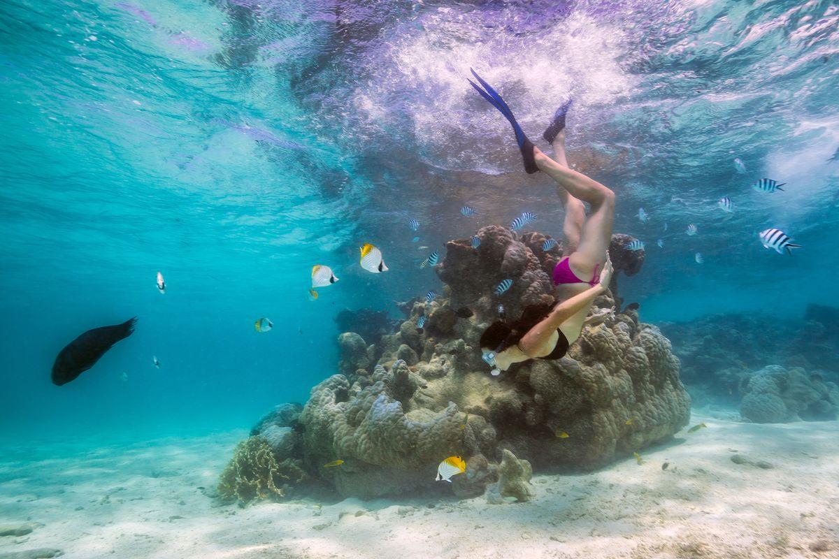 Under water in Rarotonga, The Pacific Ocean