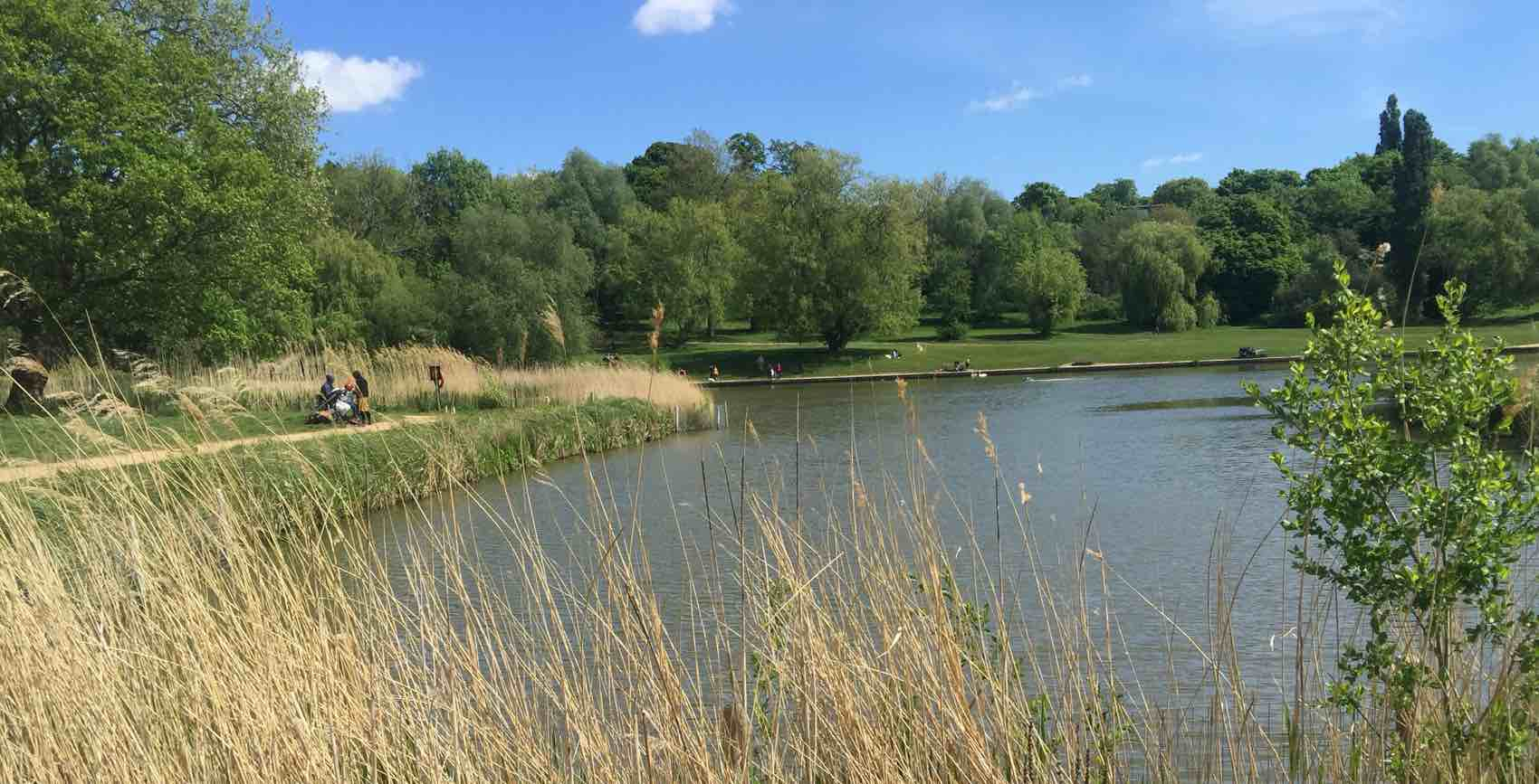 The park Hampstead Heath in North London