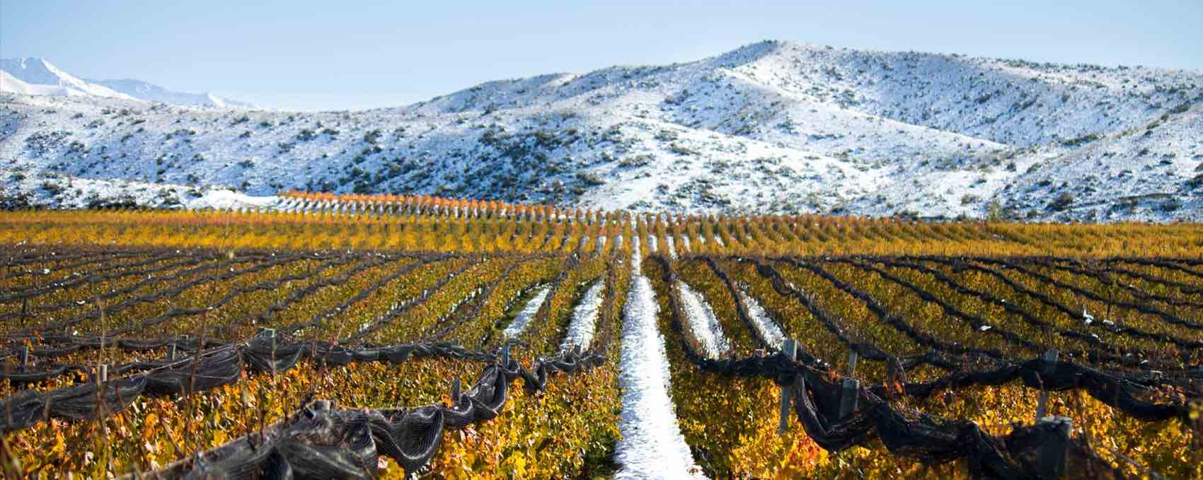 Snow and vine: Adrianna Vineyard great area for wine at almost 5,000 feet.