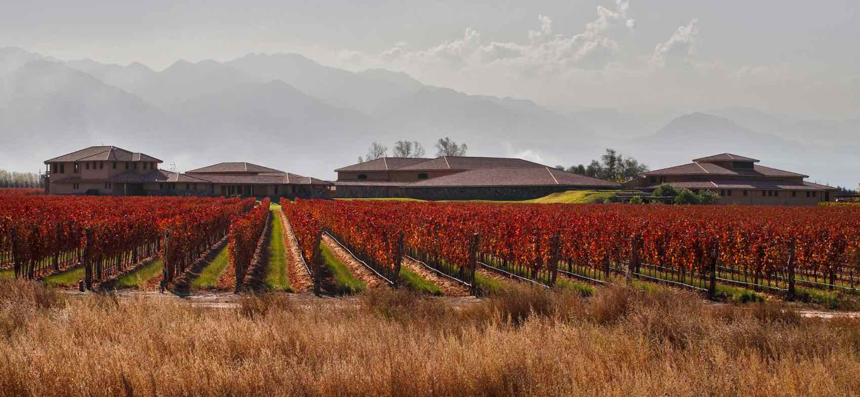 Amano winery