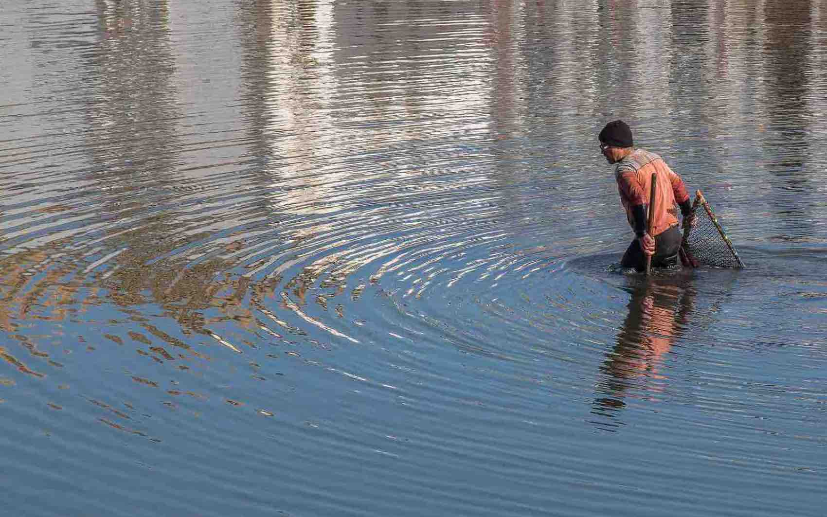A man searching for seafood in river Gilao in the middle of the town.